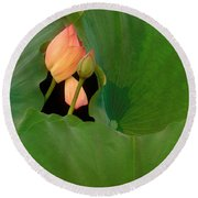 Water Lily Round Beach Towel by Mark Greenberg