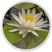 Round Beach Towel featuring the photograph Waterlily  by Anne Rodkin
