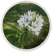 White Cleome Round Beach Towel
