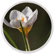 White Crocus Round Beach Towel