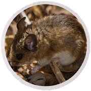 White-footed Mouse Round Beach Towel