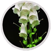 Round Beach Towel featuring the photograph White Foxglove by Albert Seger