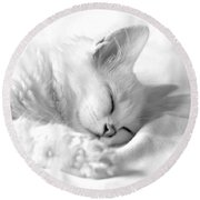 Round Beach Towel featuring the photograph White Kitten On White. by Raffaella Lunelli