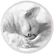 White Kitten On White. Round Beach Towel