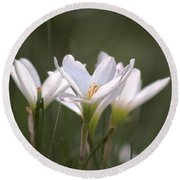 Round Beach Towel featuring the photograph White Lily - Symbol Of Purity by Ramabhadran Thirupattur