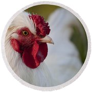 White Rooster Round Beach Towel by Michelle Wrighton