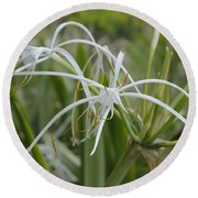 White Spider Orchid Round Beach Towel