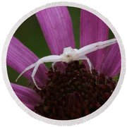 Whitebanded Crab Spider On Tennessee Coneflower Round Beach Towel by Daniel Reed