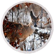 Whitetail Deer In Snow Round Beach Towel by Nava Thompson