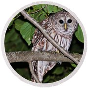 Who Are You Looking At Round Beach Towel by Cheryl Baxter