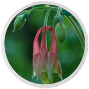 Round Beach Towel featuring the photograph Wild Columbine Flower by Daniel Reed