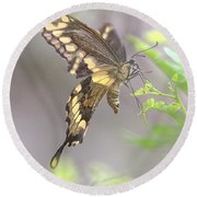 Round Beach Towel featuring the photograph Winged Ballet by Anne Rodkin