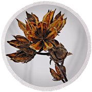 Winter Dormant Rose Of Sharon Round Beach Towel
