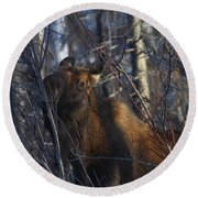 Round Beach Towel featuring the photograph Winter Food by Doug Lloyd
