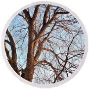 Round Beach Towel featuring the photograph Winter Sunlight On Tree  by Chalet Roome-Rigdon