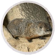 Woodchuck Round Beach Towel by Ted Kinsman