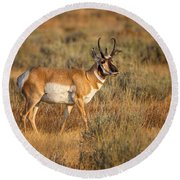 Wyoming Pronghorn Round Beach Towel