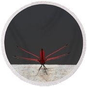 Round Beach Towel featuring the photograph X Wing Dragonfly by Nola Lee Kelsey