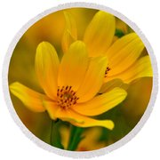 Round Beach Towel featuring the photograph Yellow Blaze by Marty Koch