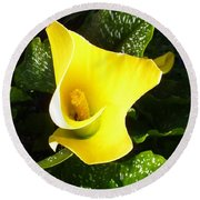 Round Beach Towel featuring the photograph Yellow Calla Lily by Carla Parris