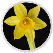 Yellow Daffodil Black Background Round Beach Towel