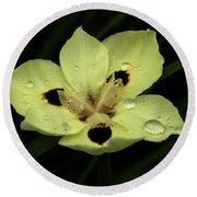 Yellow Iris With Rain Drops Round Beach Towel