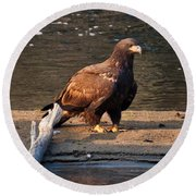 Young And Proud Round Beach Towel by Cheryl Baxter