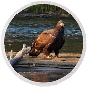 Young And Wise Round Beach Towel by Cheryl Baxter