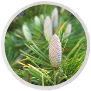 Young Pine Cones Round Beach Towel by Anne Mott