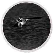 American Avocet Dance  Round Beach Towel