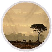 Autumn Morning, Strathglass Round Beach Towel