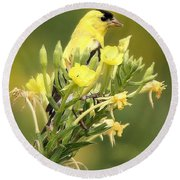 Goldfinch Round Beach Towel