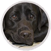 Labrador Retriever A1b Round Beach Towel