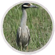 Round Beach Towel featuring the photograph Night Heron In Profile by William Selander