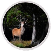 Stag In The Forest Round Beach Towel
