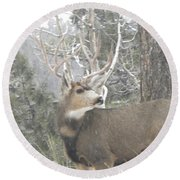 Buck Front Yard Divide Co Round Beach Towel