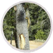 Squirrel Home Divide Co Round Beach Towel