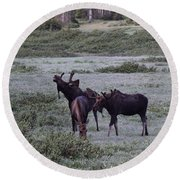 Moose Cameron Pass Co Round Beach Towel