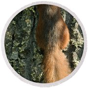 Red Squirrel  Round Beach Towel