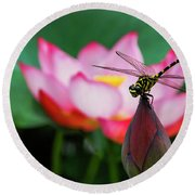 A Dragonfly On Lotus Flower Round Beach Towel