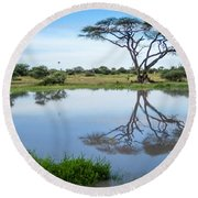 Acacia Tree Reflection Round Beach Towel