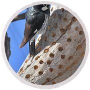 Acorn Woodpecker Round Beach Towel
