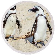 Round Beach Towel featuring the photograph African Penguins by Alexey Stiop