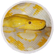 Albino Reticulated Python Round Beach Towel