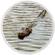 Alligator In Lake Alice Round Beach Towel