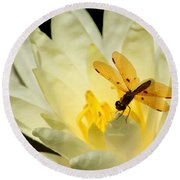 Amber Dragonfly Dancer 2 Round Beach Towel