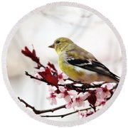 Round Beach Towel featuring the photograph American Goldfinch In Spring by Trina Ansel