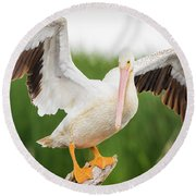 Round Beach Towel featuring the photograph American White Pelican  by Ricky L Jones