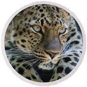 Amur Leopard #2 Round Beach Towel