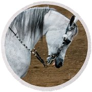 Arabian Show Horse 2 Round Beach Towel